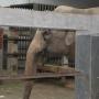 Шанхайский зоопарк и его обитатели