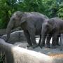 Гамбургский зоопарк Хагенбек (Hagenbecks Tierpark)