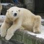 Зоопарк Шёнбрунн, Австрия