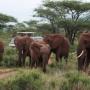 Кения. Фотосафари