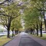 - Москва, Мичуринский проспект, д.13 - Парк Воробьёвы горы