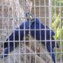 Птичий парк в Пафосе